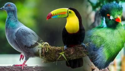 aplicaciones para aves