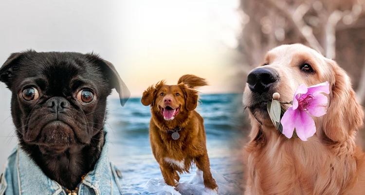 Aplicaciones para identificar perros