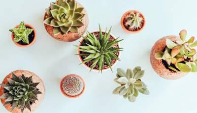 Aplicaciones para plantas