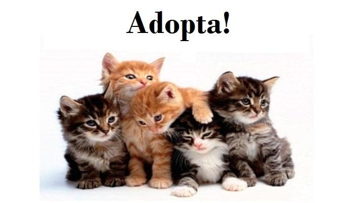 Adopta un amigo