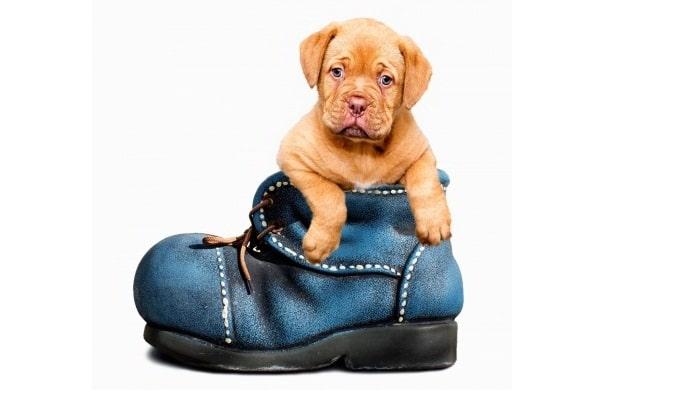 Páginas webs de mascotas